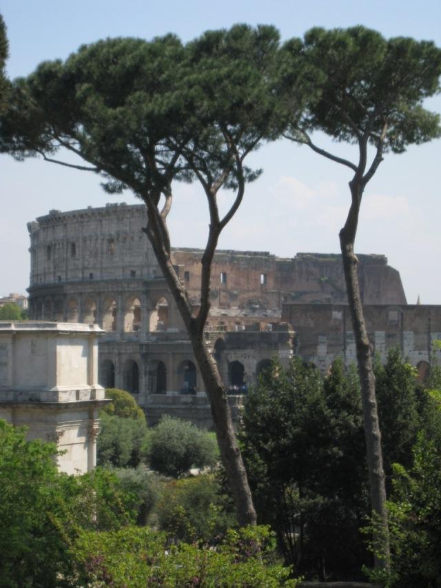 Pinos al frente del Coliseo