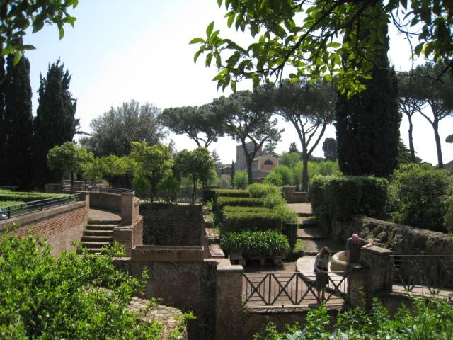 Pinos en los jardines del Foro Romano